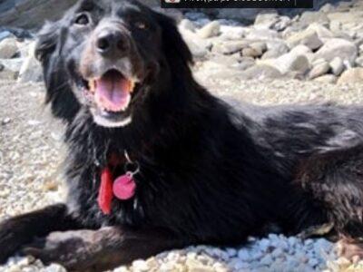 Χάθηκε μαύρος σκύλος θηλυκός Άτμα Άνδρος Σκύλος- Άνδρος