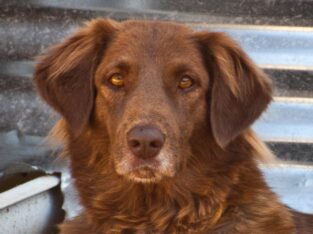 Χαρίζεται ΛΟΥΣΥ σκύλος 2 ετων Ζώα- Λουτράκι
