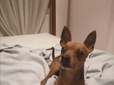 ΔΊΝΕΤΑΙ ΑΜΟΙΒΉ Χάθηκε σκυλος Ακτή Ελιά Χαλκιδικής, ΧΑΘΗΚΕ ΚΑΤΟΙΚΙΔΙΟ- Χαλκιδική