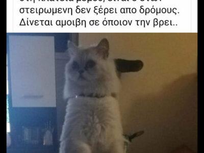 Χάθηκε γάτα Κορυδαλλός Γάτα- Κορυδαλλός