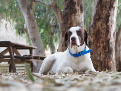Χάθηκε σκύλος Σίβα περιοχή Γκυζη Κατοικίδιο-Ζώο-Χαθηκε- Αθήνα