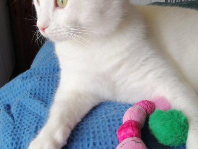 Χαρίζεται Πάρης, γάτα  ,τσιπαρισμένος Αθήνα Κατοικίδια-Ζώα- Αθήνα