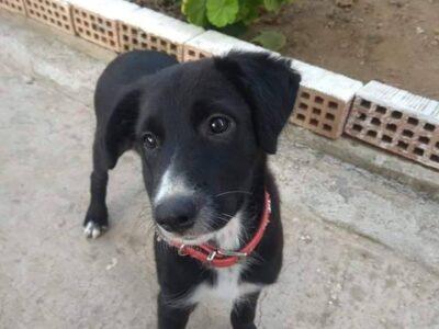 Χαρίζονται 2 σκυλάκια JACK& SPARROW Χανιά Κατοικίδια-Ζώα- Χανιά