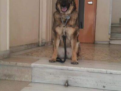Χαρίζεται σκύλος 6 ετών θηλυκιά, στειρωμένη, υγιέστατη Κατοικίδια-Ζώα- Νέα Φιλαδέλφεια Αττικής
