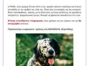 Χάθηκε ο Ράφα ,ημίαιμο σεττερ Τηνος Σκύλος- Τήνος