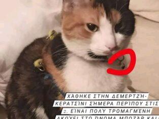Χάθηκε γατα Κερατσινι Γάτα- Unnamed Road
