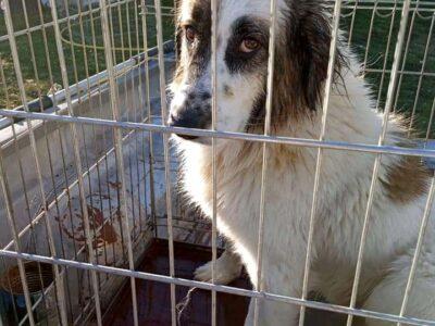 Χαρίζεται σκύλος Ιωαννινα Σκύλος- Ιωάννινα