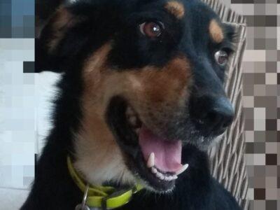 ΧΑΘΗΚΕ ΣΚΥΛΟΣ – Άγιος Παύλος Χαλκιδικής Σκύλος- Άγιος Παύλος Χαλκιδικής