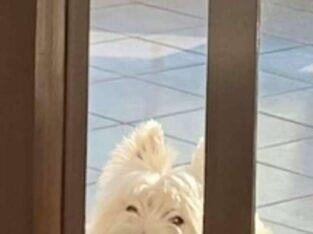 Χάθηκε σκύλος Πανόραμα Σκουντυ Σκύλος- Πανόραμα