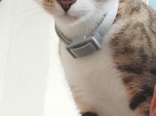 ΧΑΘΗΚΕ ΑΡΣΕΝΙΚΟ ΓΑΤΑΚΙ 6 ΜΗΝΩΝ ΠΕΡΙΟΧΗ ΓΑΖΙ ΤΗΛ.6986840600 Γάτα- Ηράκλειο