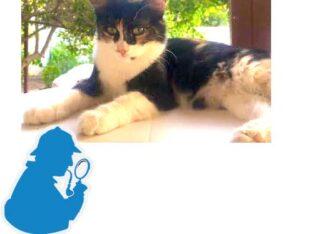 Χάθηκεγατάκι άρρωστο Λαγονήσι Γάτα- Λαγονήσι Αττικής