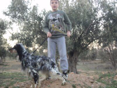 ΧΑΘΗΚΕ ΣΕΤΕΡΙΝΑ ΤΡΙΧΡΩΜΗ ΑΠΟ ΤΗΝ ΠΕΡΙΟΧΗ ΚΗΦΙΣΙΑΣ ΣΤΙΣ 13-11-2020. ΑΚΟΥΕΙ ΣΤΟ ΟΝΟΜΑ ΚΙΡΚΗ. Σκύλος- Κηφισιά