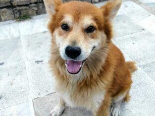 Επείγει υιοθεσια η φιλοξενια Σκύλος- Κατερίνη