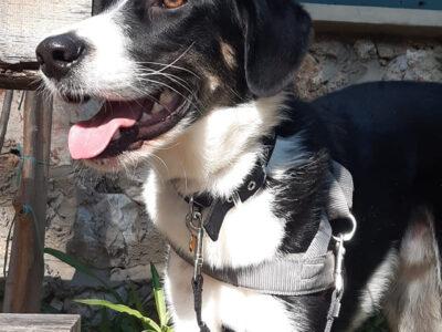 Δίνεται για υιοθεσία ο BENNY ως ισότιμο μέλος οικογένειας Σκύλος- Μέγαρα