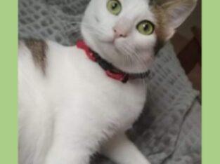 Χάθηκε από σπίτι 🏡 η Γκρέις Γάτα- Γλυκά Νερά