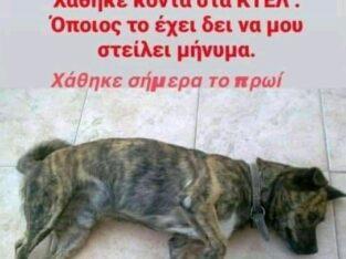 Χάθηκε ο Τιγρης στα Χανιά Σκύλος- Χανιά