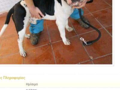 Μια οικογένεια για τον κούκλο , Σκύλος- Πέραμα