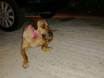 Βρέθηκε σκυλάκι στη Δάφνη Σκύλος- Δάφνη
