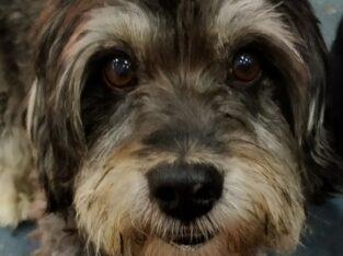 Χάθηκε σκύλος στα Χανιά περιοχή Αγίου Λουκά Σκύλος- Χανιά