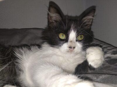 Αρσενικό γατάκι 5 μηνών – Ηράκλειο