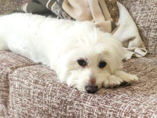 Χάθηκε θηλυκό σκυλάκι περιοχή Τουμπα Σκύλος- Άνω τουμπα