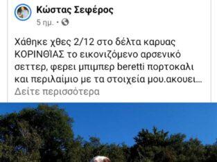 Χαθηκε η κλαπηκε λευκο σεττερ Σκύλος- Ξυλόκαστρο