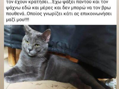Χάθηκε Γάτα- Περιστέρι