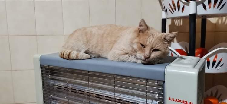 Βρέθηκε γάτος Γάτα- Ηράκλειο