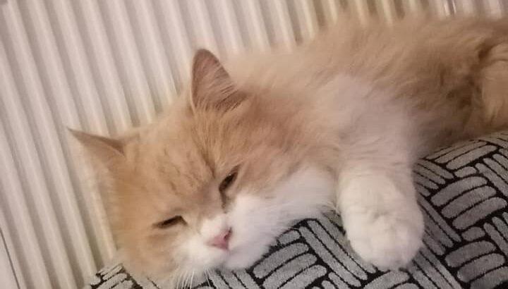 Βρέθηκε αυτή η γατούλα στην Νίκαια. Γάτα- Νίκαια