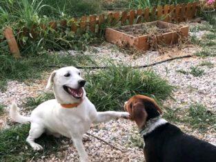Χάθηκε σκυλάκι, ο Πικάσο στην Αγία Μαρίνα Χανιών (ΒΡΕΘΗΚΕ ΟΧΙ ΕΝ ΖΩΗ 😢)