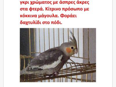 Χάθηκε Κοκατιλ Πτηνό- Γάζι