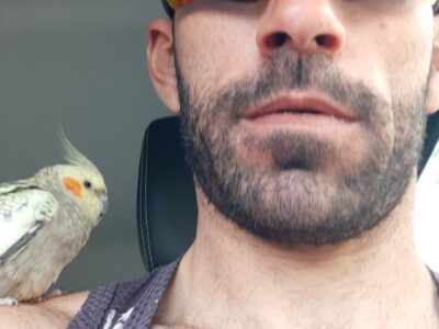 Βρέθηκε παπαγάλος – Άγιοι Απόστολοι Χανιά