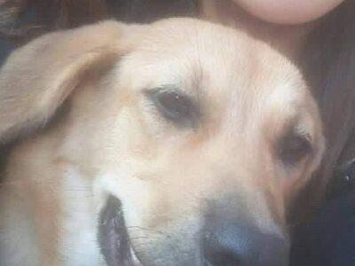 Χάθηκε η Μπέλα Σκύλος- Μουρνιές
