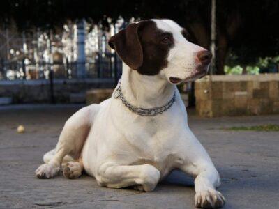 Χάθηκε η σκυλίτσα μας στο Γκύζη , 06/01/2020 , τηλ.6983231265  Σκύλος- Γκύζη