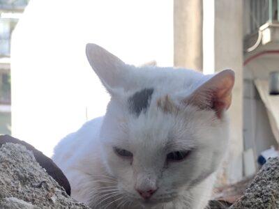 Χάθηκε η γατούλα στο Παγκράτι φορούσε μαύρο λουράκι στο λαιμό. Γάτα- Αθήνα