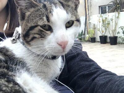 Βρέθηκε γατούλης – ΚΟΡΥΔΑΛΛΟΣ Γάτα- Κορυδαλλός