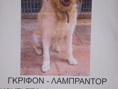 ΧΑΘΗΚΕ O ΜΠΡΟΥΝΟ, ΠΑΡΑΚΑΛΩ ΕΝΗΜΕΡΩΣΤΕ ΜΕ ΑΝ ΔΕΙΤΕ ΚΑΤΙ Σκύλος- Αθήνα