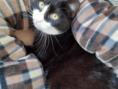 Χαριζονται γατούλης και γατούλα Γάτα- Γαλάτσι
