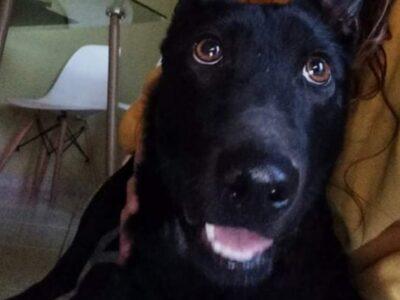 ΑΞΙΟΛΑΤΡΕΥΤΟ ΚΟΥΤΑΒΙ ΠΡΟΣ ΥΙΟΘΕΣΙΑ Σκύλος- Ηράκλειο