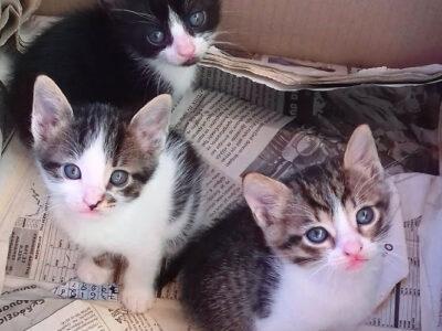 Ο Μιμης, η Λιτσα και ο Προκοπης Γάτα- Βάμος