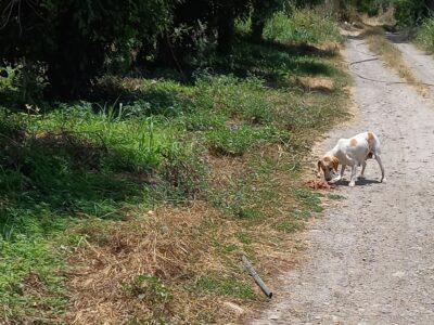 Σκυλίτσα εγκυος βρέθηκε εγκαταλελημμενη -Αγυιά Σκύλος- ΑΓΥΙΑ ΧΑΝΙΑ ΚΡΗΤΗ