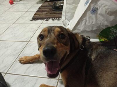 Χαριζεται Σκύλακος στα Χανιά Σκύλος- Χανιά