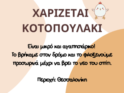 Χαρίζεται κοτοπουλάκι Είναι μικρό και αγαπησιάρικο! Το βρήκαμε στον δρόμο και το φιλοξενούμε προσωρινά μέχρι να βρει το νεο του σπίτι. Περιοχή: Θεσσαλονίκη *Παρακαλώ Πτηνό- Θεσσαλονίκη
