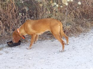 Σκυλίτσα με κουδουνάκι στο λαιμό – Αγυιά Σκύλος- Επισκοπή Αγυιάς Χανιά