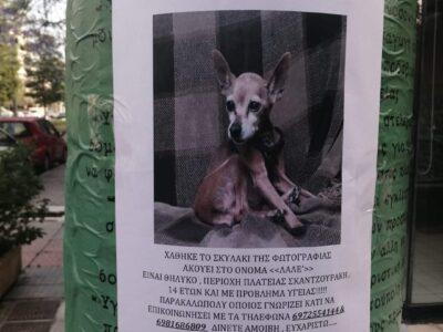 Χάθηκε/κλάπηκε η σκυλίτσα ράτσας pinscher ηλικίας 14 ετών με προβλήματα υγείας..Ακούει στο όνομα ΛΑΛΕ'. Σκύλος- Νέα Σμύρνη