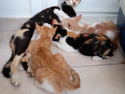 Χαρίζονται για υιοθεσία σε σπίτι Γάτα- Βριλήσσια