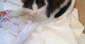 Γατάκι 2,5 μηνών βρέθηκε στην Παλληνη Γάτα- Παλλήνη