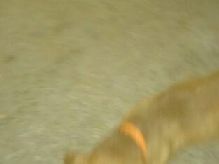 Καφέ σκυλος Άγιοι Απόστολοι Χανιά Σκύλος- Χανιά