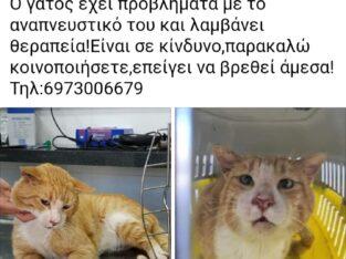 Χάθηκε Γάτος Κάτω Γαλατάς Χανιά Γάτα- Γαλατάς