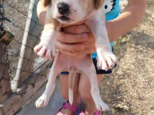 Χαριζονται κουταβακια Σκύλος- Νεα ιωνια βολος